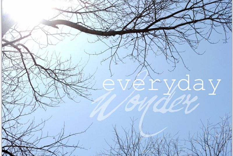 Everyday wonder_2b
