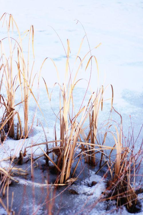 Winter pond_3