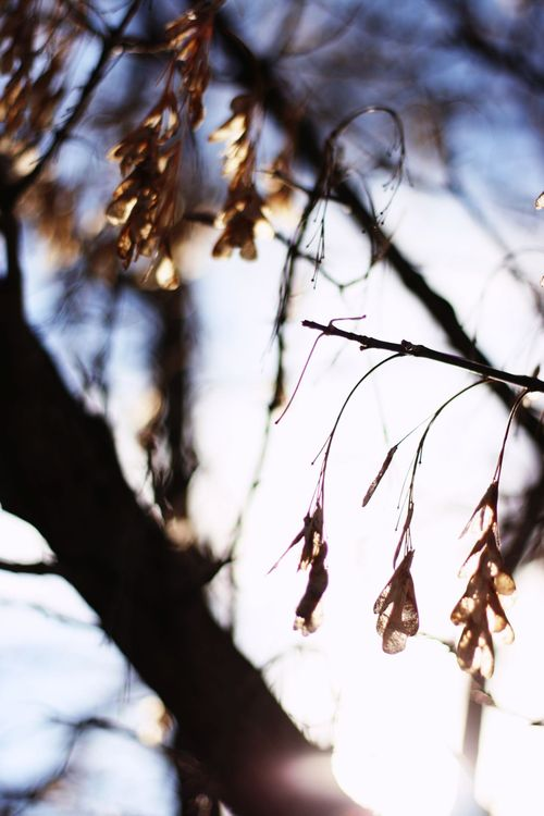 Winter pond_1