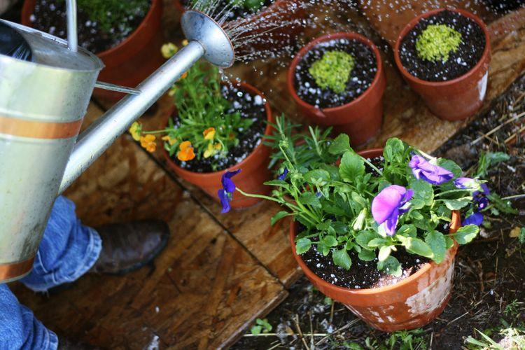 Gardening gene